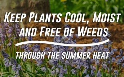Keep Plants Cool, Moist and Free of Weeds